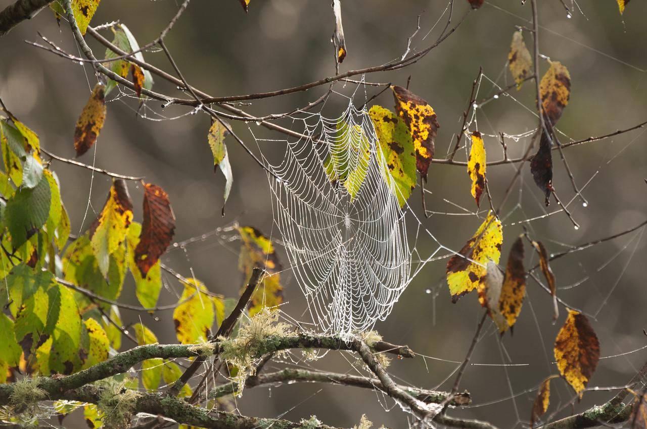 Spiderweb - Norfork River Morning (3)
