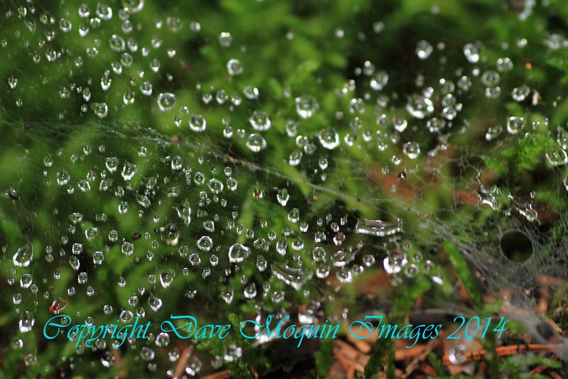 Dew on Spiderweb- Fox Landing Trail