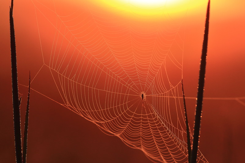 Webby Sunrise- Sherburne NWR