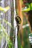 Garden Spider 1670