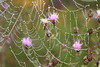 Dew covered Spiderweb on Thistle- Stolte Rd.