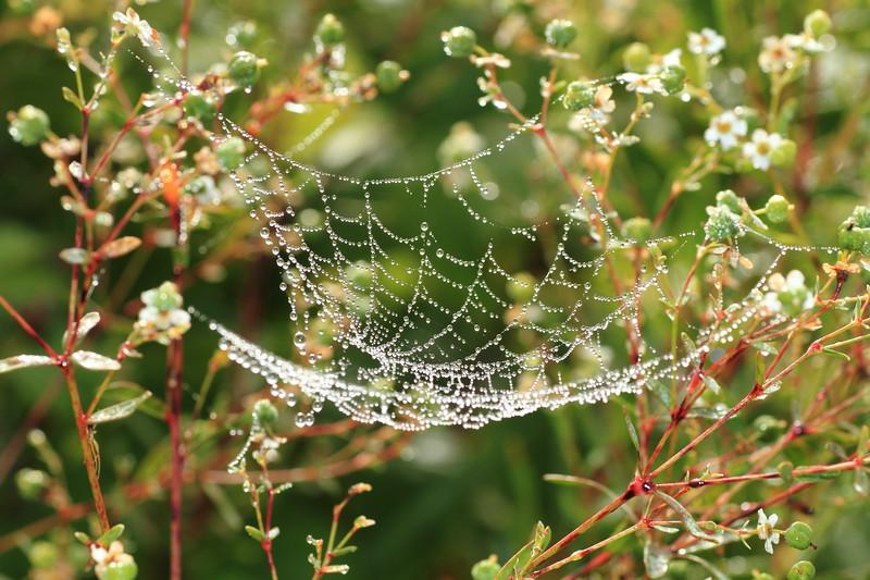 Spiderhammock- Stolte Rd., Fish Lake WMA