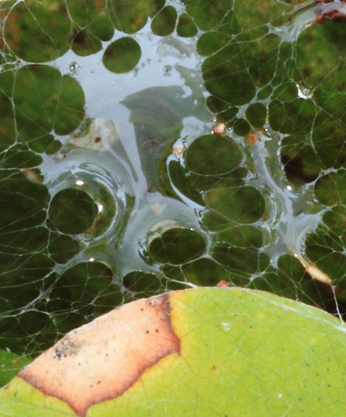 Spider Web formation- Sherburne NWR