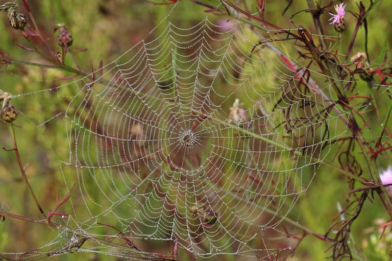 Spiderweb- Stolte Rd., Fish Lake WMA