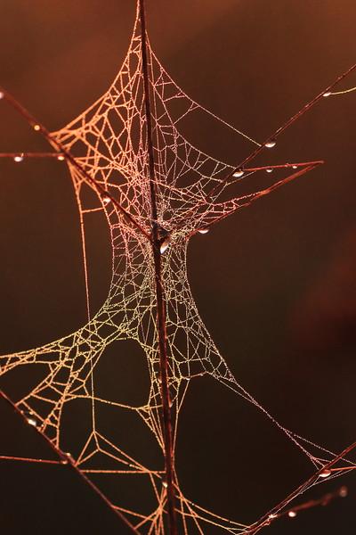 Spider Web as Art- Sherburne NWR