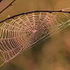 Spider Web- Sherburne NWR