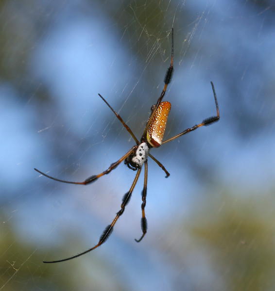 00aFavorite 20070903 Large spider, Orton Plantation Gardens, Brunswick County, NC
