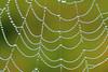 Dew covered  spiderweb- Phantom Lake