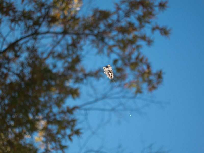20121022 Spider floating and suspended by his-her web, Chapel Hill NC (1418p)