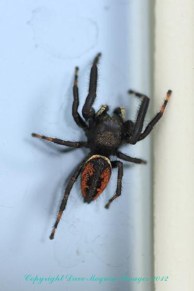 Spider- Front Door