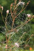 Spiderweb- Stolte Rd.- Fish Lake WMA