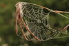 Spiderweb- Stolte Rd., Fish Lake WMA