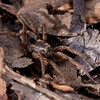 Wolf Spider - Secor Metropark - April 23, 2011