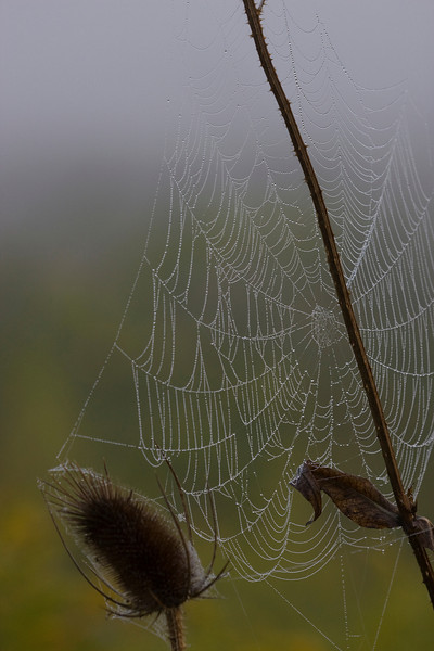 Spider web with early morning fog - September 2009