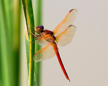 A second dragonfly