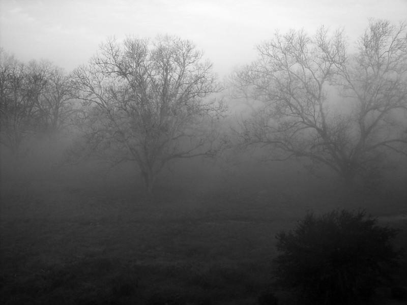 Foggy Louisiana Morning