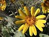 Hillside flower.... Colangela's ?<br /> <br /> --- 5512_CRW_01ba ---