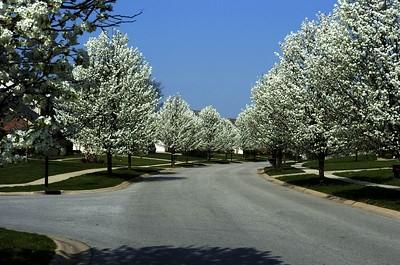 Spring 2005 - trees in bloom