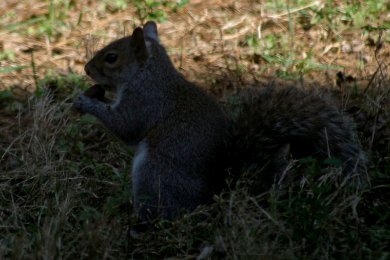 Just a squirrel trying to get a nut...