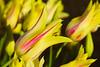 20100412_Tulips 2010_0285