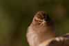 Soffie sparrow