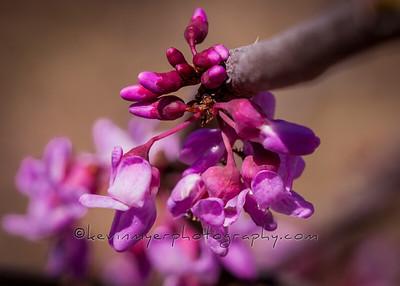 Spring Buds, Etc