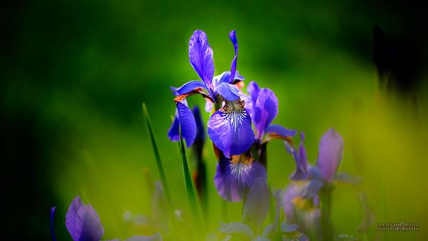 Spring Flowers 2016