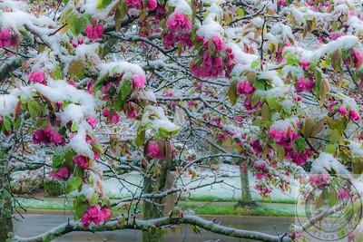 20140415-IMG_1800 Spring Frosting v1