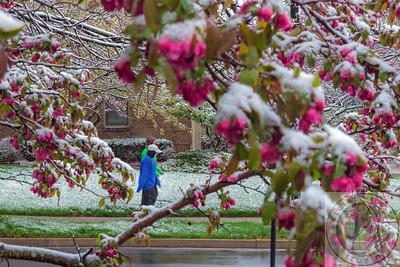 20140415-IMG_1805 Spring Frosting V2