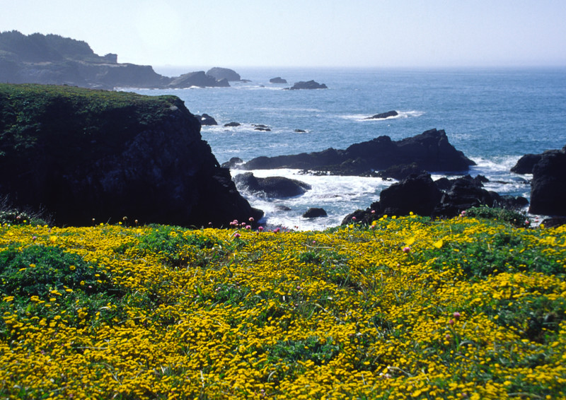 Spring wildflowers on Northern California Coast