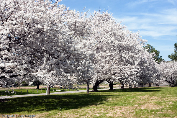 Spring at Audubon Park