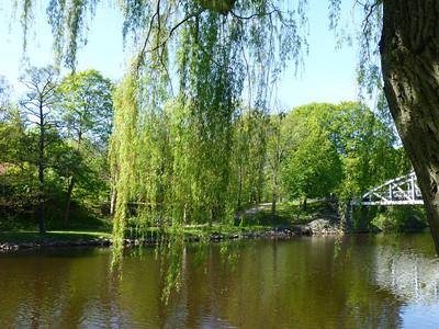 Willow nearby Rönneå