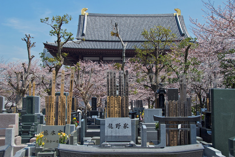 A cemetery and shrine in Tokyo