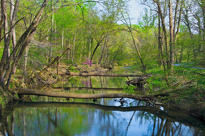 The calm reflective water of Rock Creek in spring.