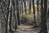 Path & forscythia_8940