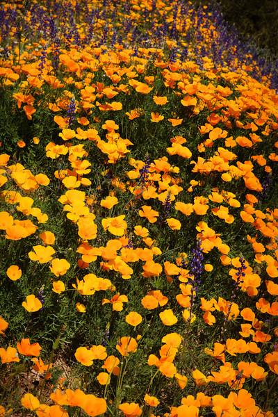 Spring wildflowers 2010