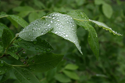 leaves after rain II