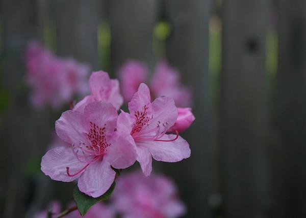 hues of spring
