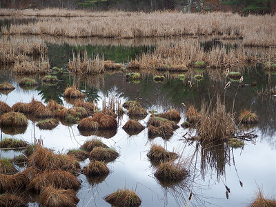 pine meadow pond