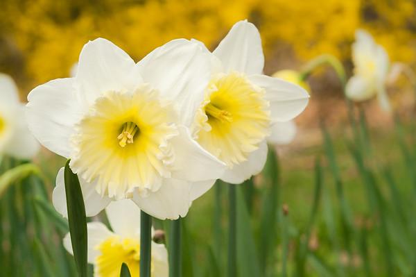 Spring Loaded