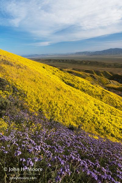 Wildflowers on the slope of the Temblor Mountain range.  Carrizo Plain National Monument.