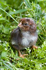 chick0189
