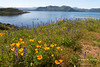 A boat departs the marina at Diamond Valley Lake in Southern California, past fields of California poppies and Arroyo lupine.