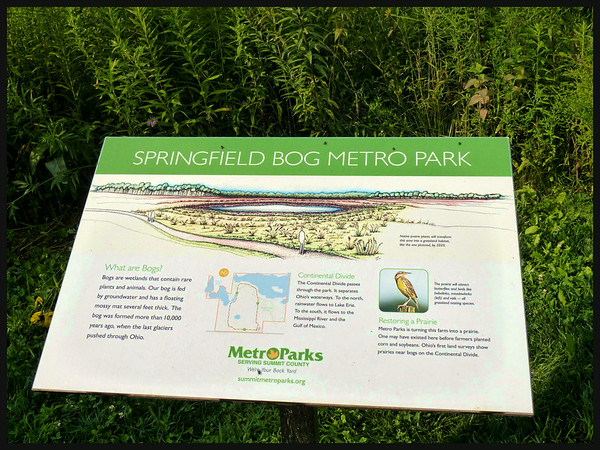 Springfield Bog
