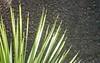 Palm Fan 1