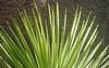 Palm Fan 2