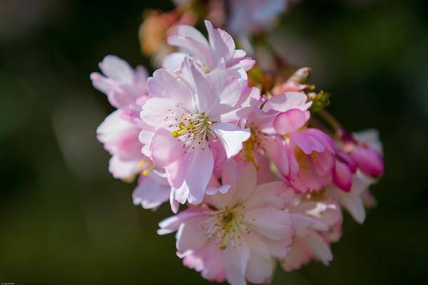 Frühlingszauber / Spring magic