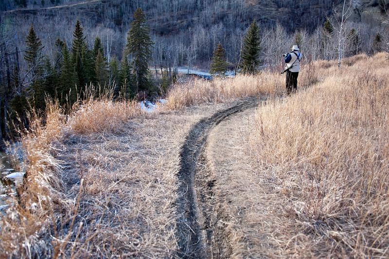 Fish Creek Provincial Park and Spring Walks