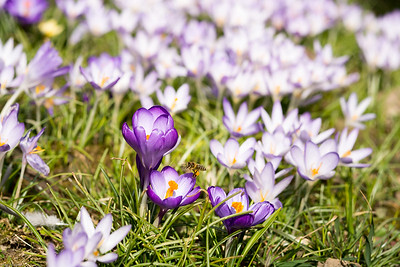 Frühjahrsbesuch / Springtime visit