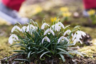 Gegen Frühlingsmüdigkeit / Against spring fatigue